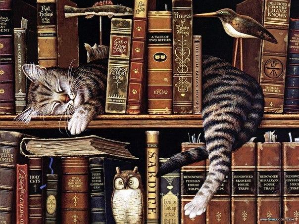 кошка и знания